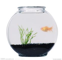魚缸與風水之間的作用