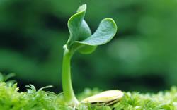 植物也能破壞你運氣