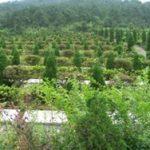 中國多地墓地價格遠超房價
