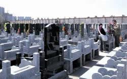 北京市民赴河北天津買墓成風