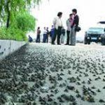 先南京後湖北,上千蛤蟆過街引地震擔憂