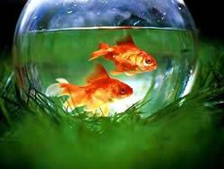 風水學中魚缸避凶的妙招
