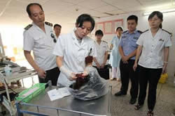 【奇聞】重慶黑市購買胎盤贈送菜譜
